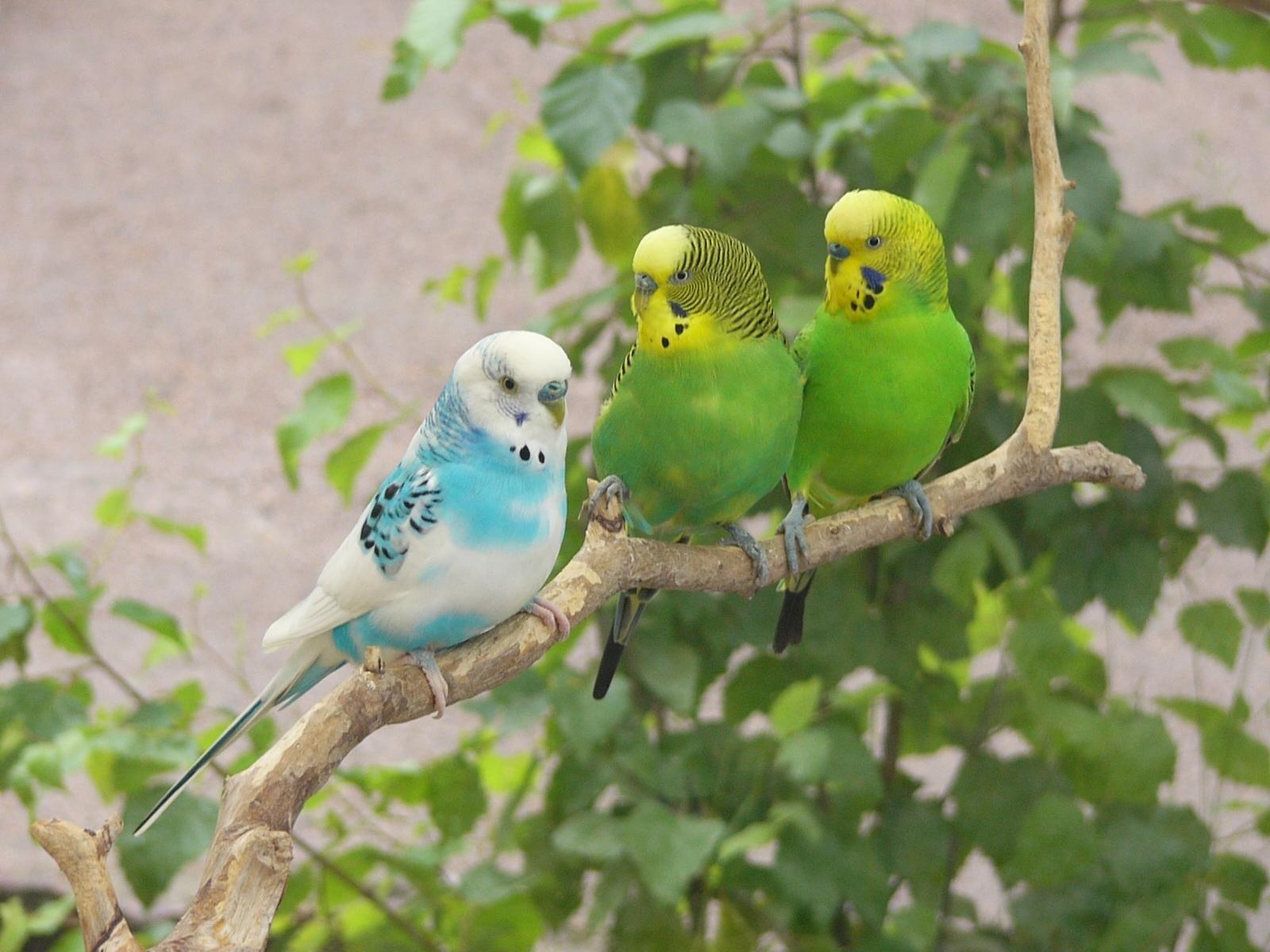 pinmonika adamska on birds | pinterest | flower wallpaper, of