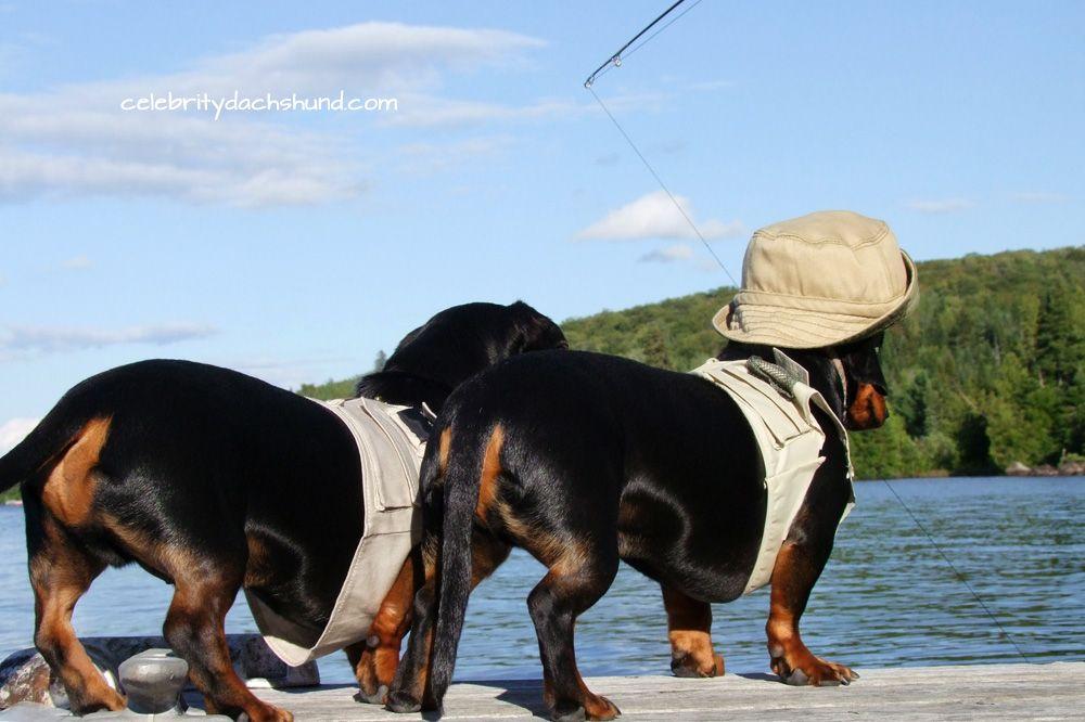 Little dachshunds fishing httpwwwcelebritydachshund