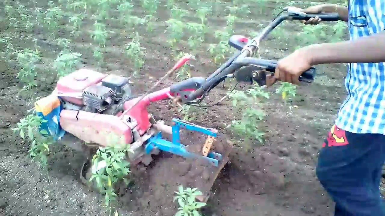 Intercaltivation in Mirchi Multipurpose Use Outdoor