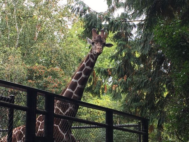 Seattle Woodland Park Zoo With Kids Seattle Travel Woodland Park Zoo Scenery