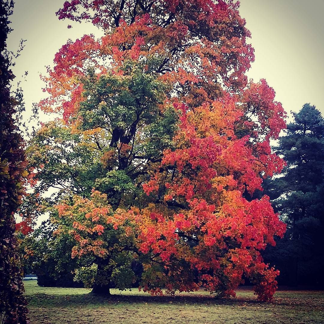 New photo online Fallis aninspiring time for anyone who loves#autumn #colors Hope you like it