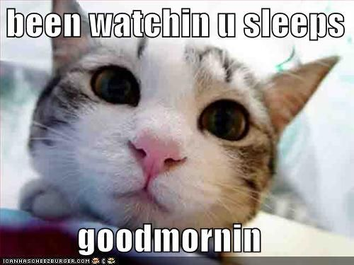 Animals Pets Cats Kittens Funny Funny Animals Funny Animals With Captions Cute Funny Animals