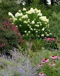 Image Result For Limelight Hydrangea Companion Plants Commercial Landscaping Beautiful Hydrangeas Hydrangea Garden
