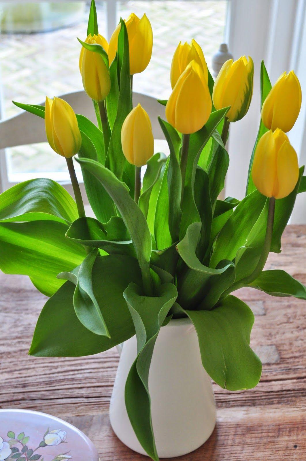 T bezige bijtje pretty flowers pinterest flowers yellow quenalbertini yellow tulips in a white vase floridaeventfo Gallery