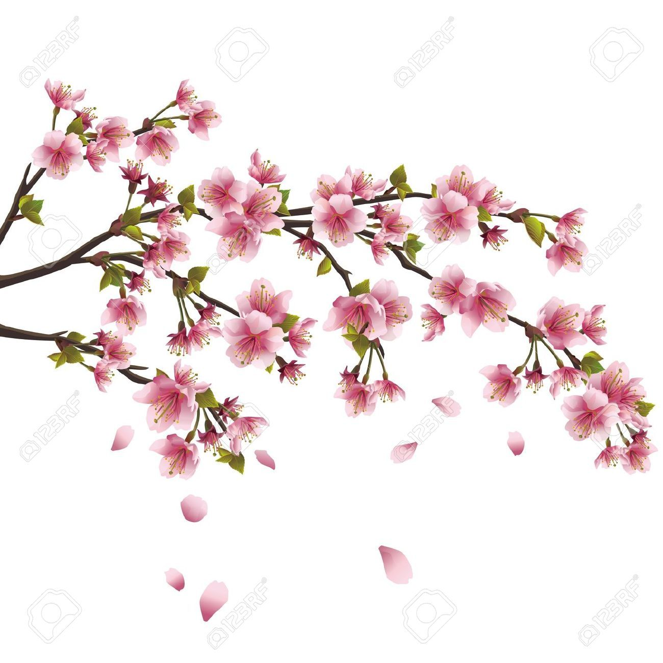 Branche Fleur De Cerisier