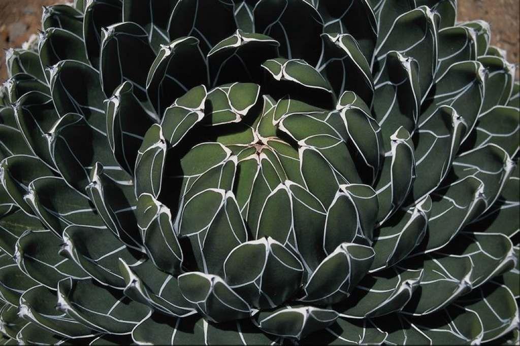 http://3dsmodels.com/textures/Green/675072.JPG