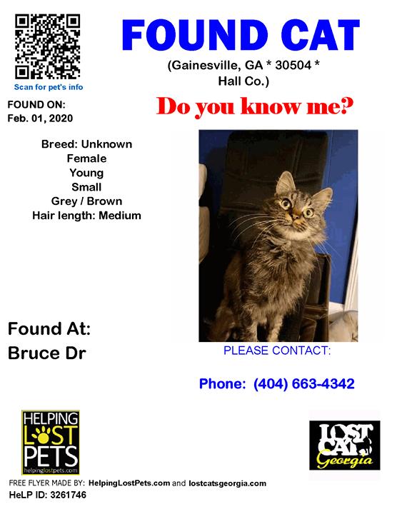Found Cat Gainesville GA Feb.01 2020 Closest
