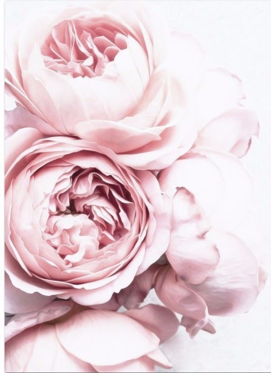 6.9AUD - Blush Pink And White Peony/ Decor Wall Cloth High Quality Canvas Print Art Gift #ebay #Home & Garden #allwhiteclothes