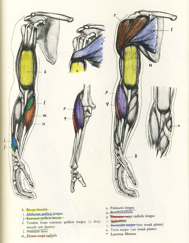http://learninganatomy.tumblr.com/page/6 | Tutorials | Pinterest ...