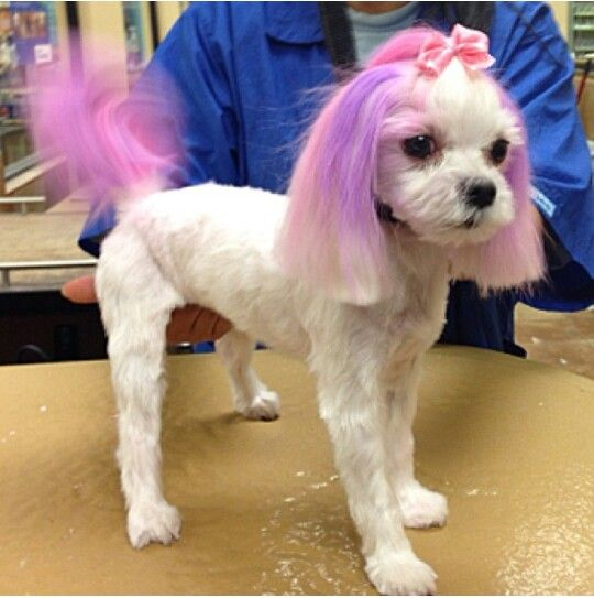 Petsmart Pet Expressions Poodle Grooming Pink Dog Creative