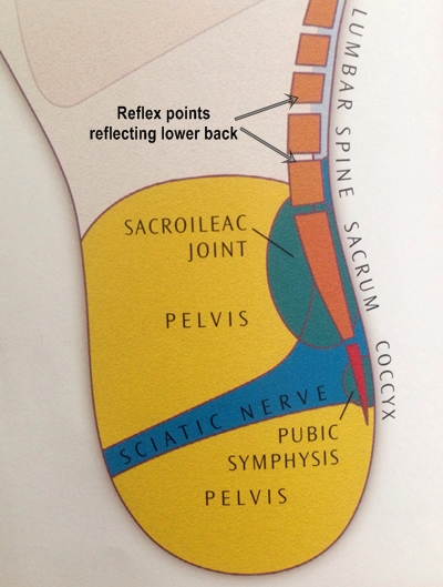 reflex points of lower back  reflexology to help spine pain
