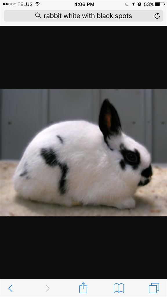 Lost Rabbit Female London On Canada N6b 1g9 Losing A Pet Pets Animals