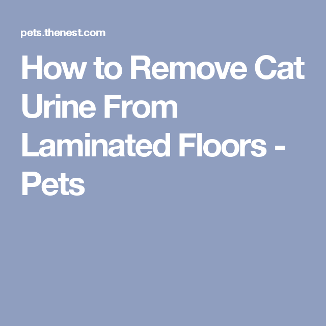 How To Remove Cat Urine From Laminated Floors Cleaning
