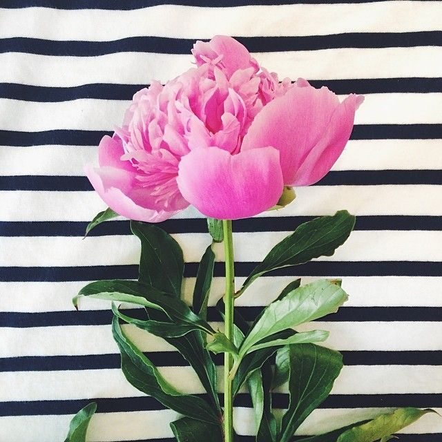 Peony & black + white stripes