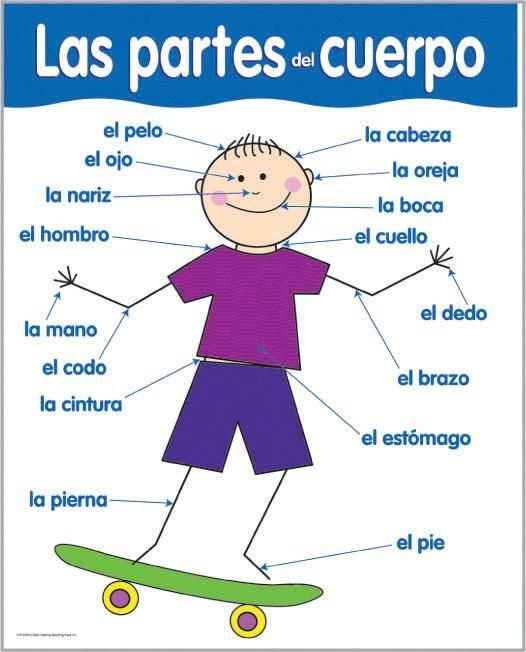 spanish body parts worksheet Termolak – Body Parts in Spanish Worksheet