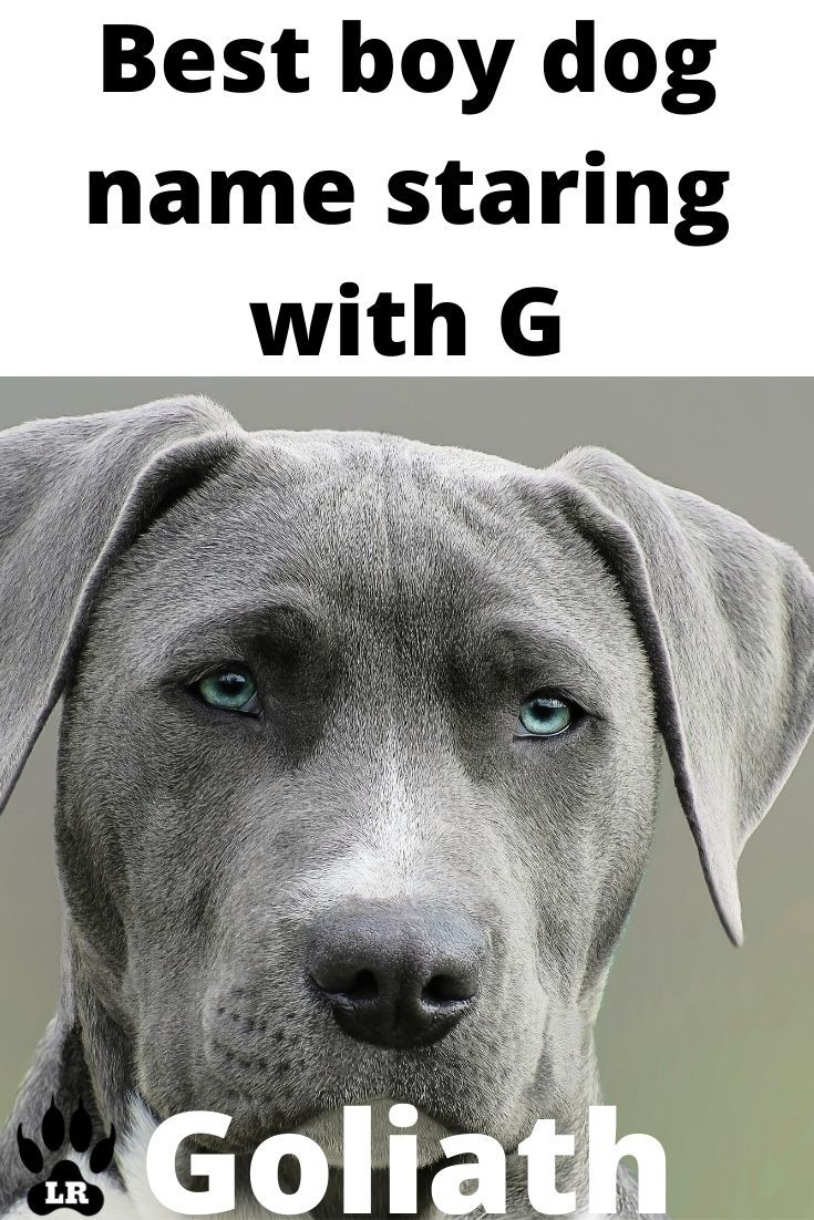 400+ Boy Dog Names AZ in 2020 Dog names, Boy dog names