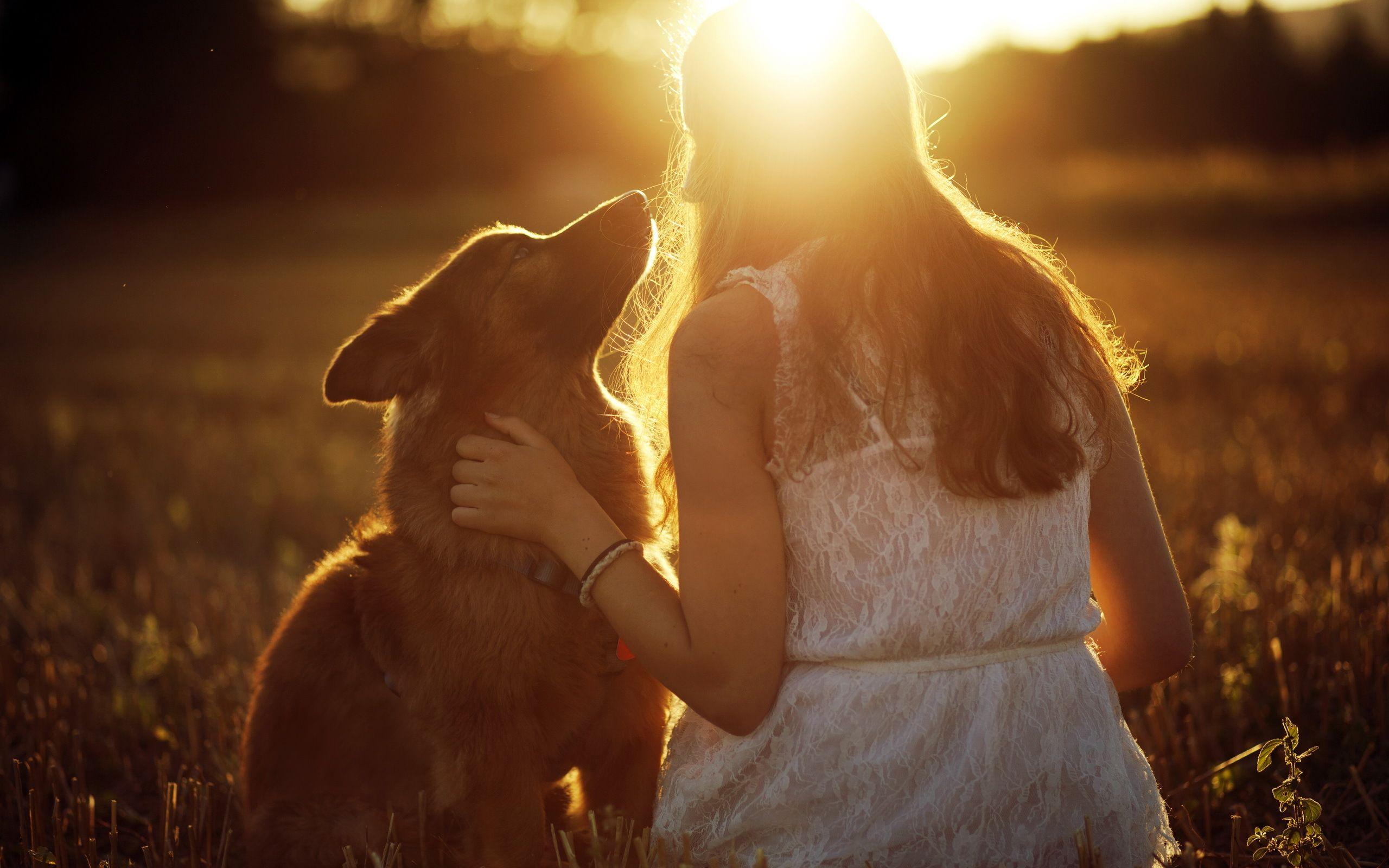 Download wallpaper girl, light, mood, dog, section mood in