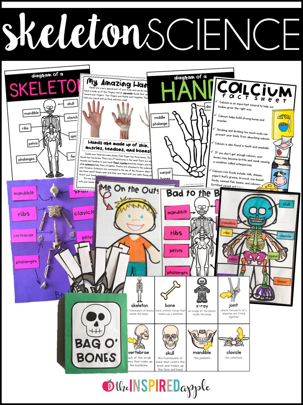 Teaching The Skeletal System