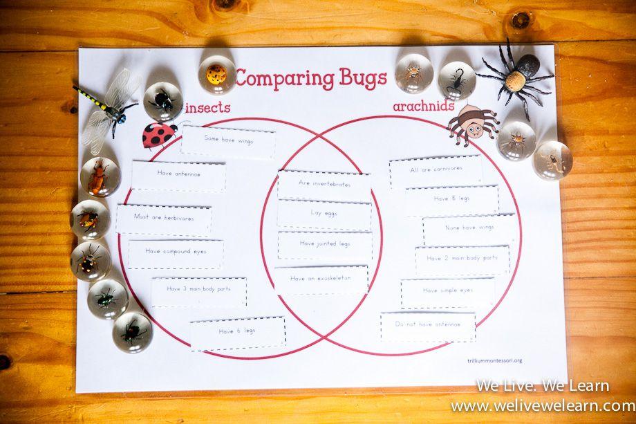 Comparing Bugs  U2014 Venn Diagram