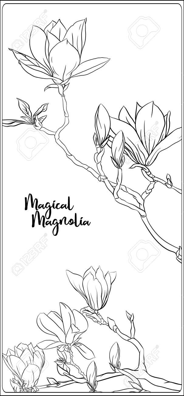 Magnolia tree branch with flowers. Coloring page for the ...