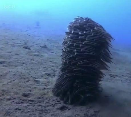 Fish trying to walk underwater