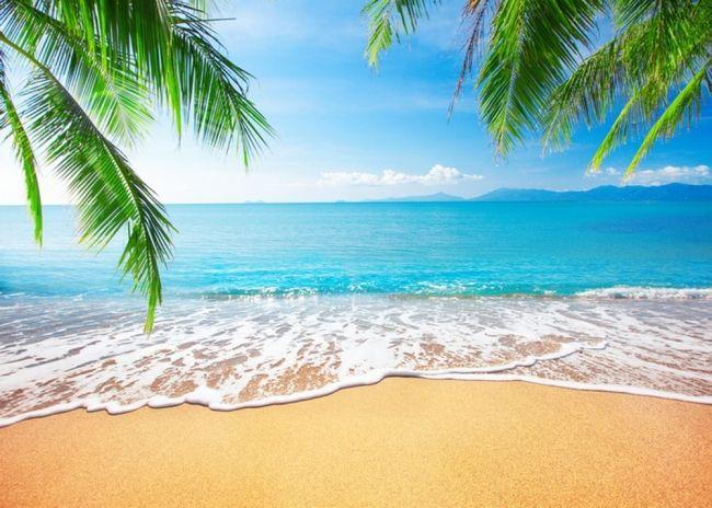 Blue Sky White Clouds Palm Trees Coconut Tree Beach ...