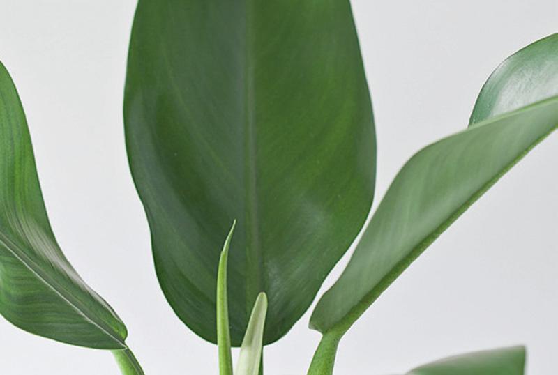 As Plantas Certas Para Cultivar A Sombra Plantas De Sombra