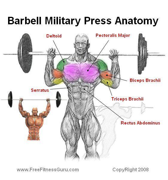 Overhead shoulder press: | Training | Pinterest | Workout, Exercises ...