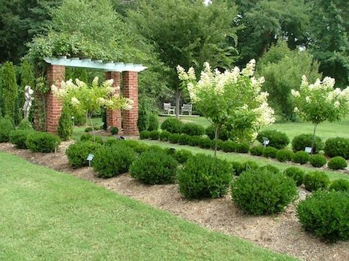 10 best small evergreen shrubs evergreen shrubs shrub for Best small bushes for landscaping