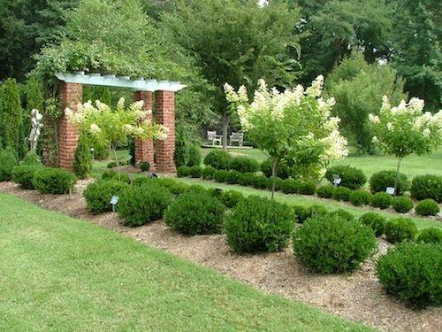 10 Best Small Evergreen Shrubs Landscaping Shrubs Small 400 x 300