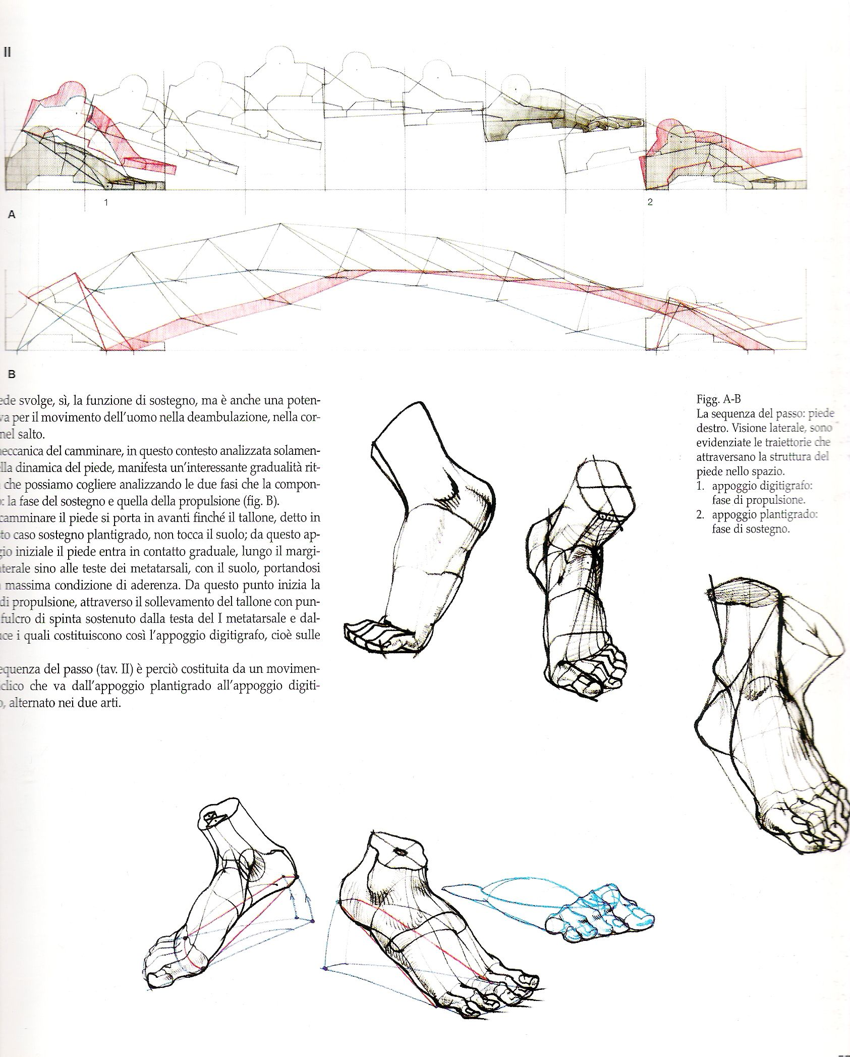 Pin by character design references on character anatomy feet dessin anatomie artistique - Dessin de course a pied ...