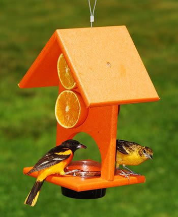 Orange And Jelly Oriole Feeder Bird Stuff Oriole Bird