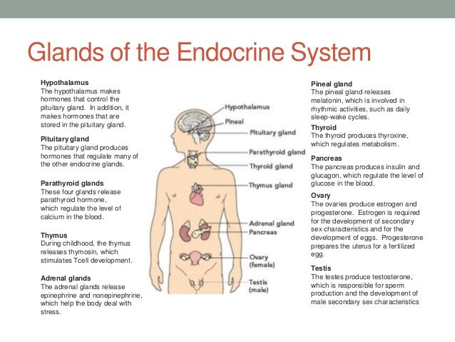 Glands of the endocrine system anatomy physiology pinterest