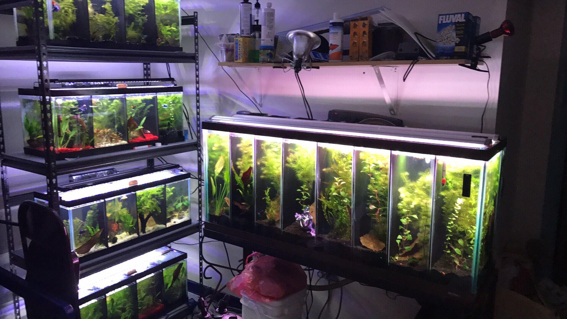 Unique De Aquarium 1000 Litres Des Idées Idées de table