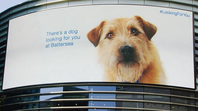 An Adorable Homeless Dog Follows People Around Via A New Interactive Billboard Battersea Dogs Battersea Dogs Home Dog Charities