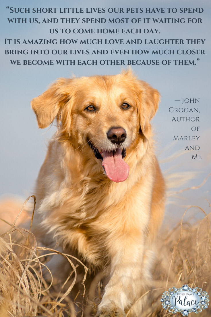 Pin On Pet Quotes We Love