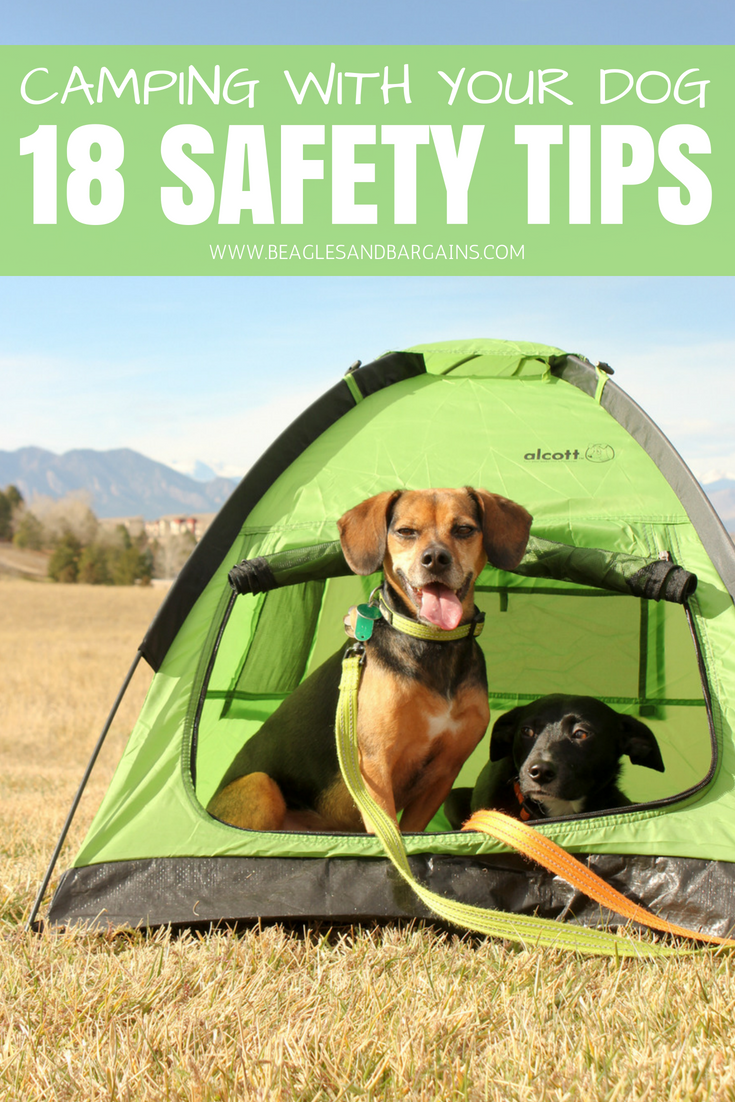 Pin by Chloe Hirsch on van in 2020 | Dog camping, Hiking ...