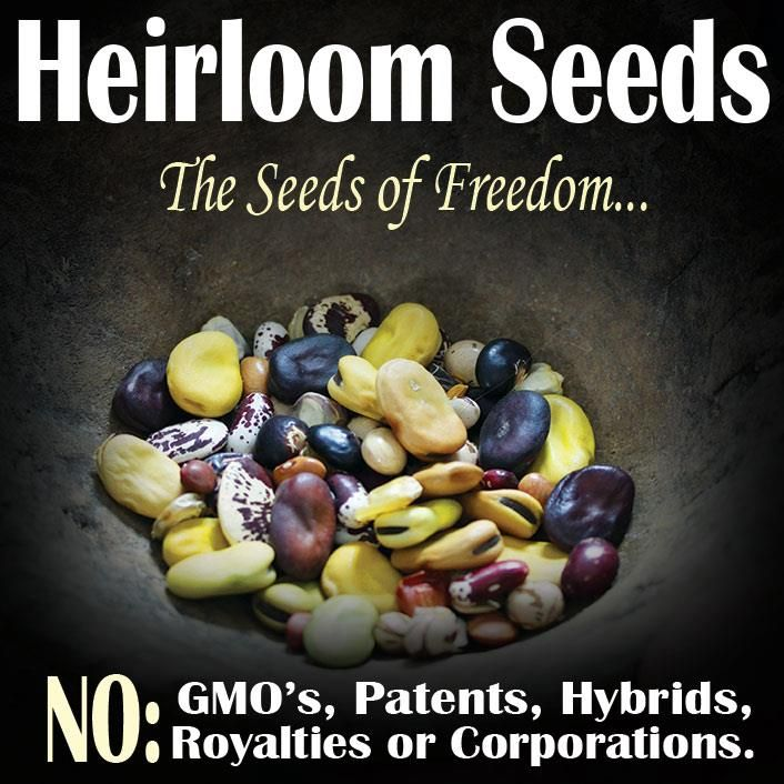 Heirloom seeds: The seeds of freedom.  SAVE YOUR SEEDS! No GMO's, patents, hybrids, royalties. Check out SeedSavers.org online