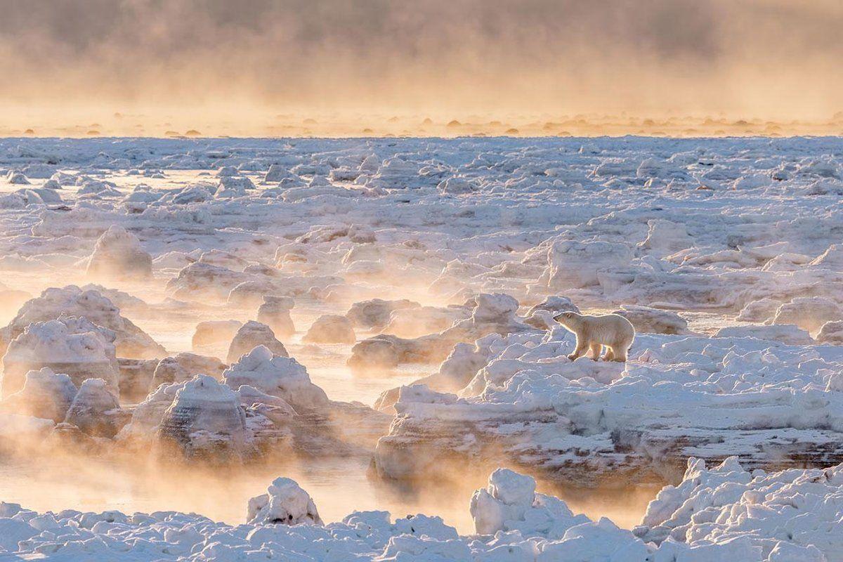 Osamotený medveď uprostred ľadovej pláne. To je víťaz fotosúťaže portálu The…