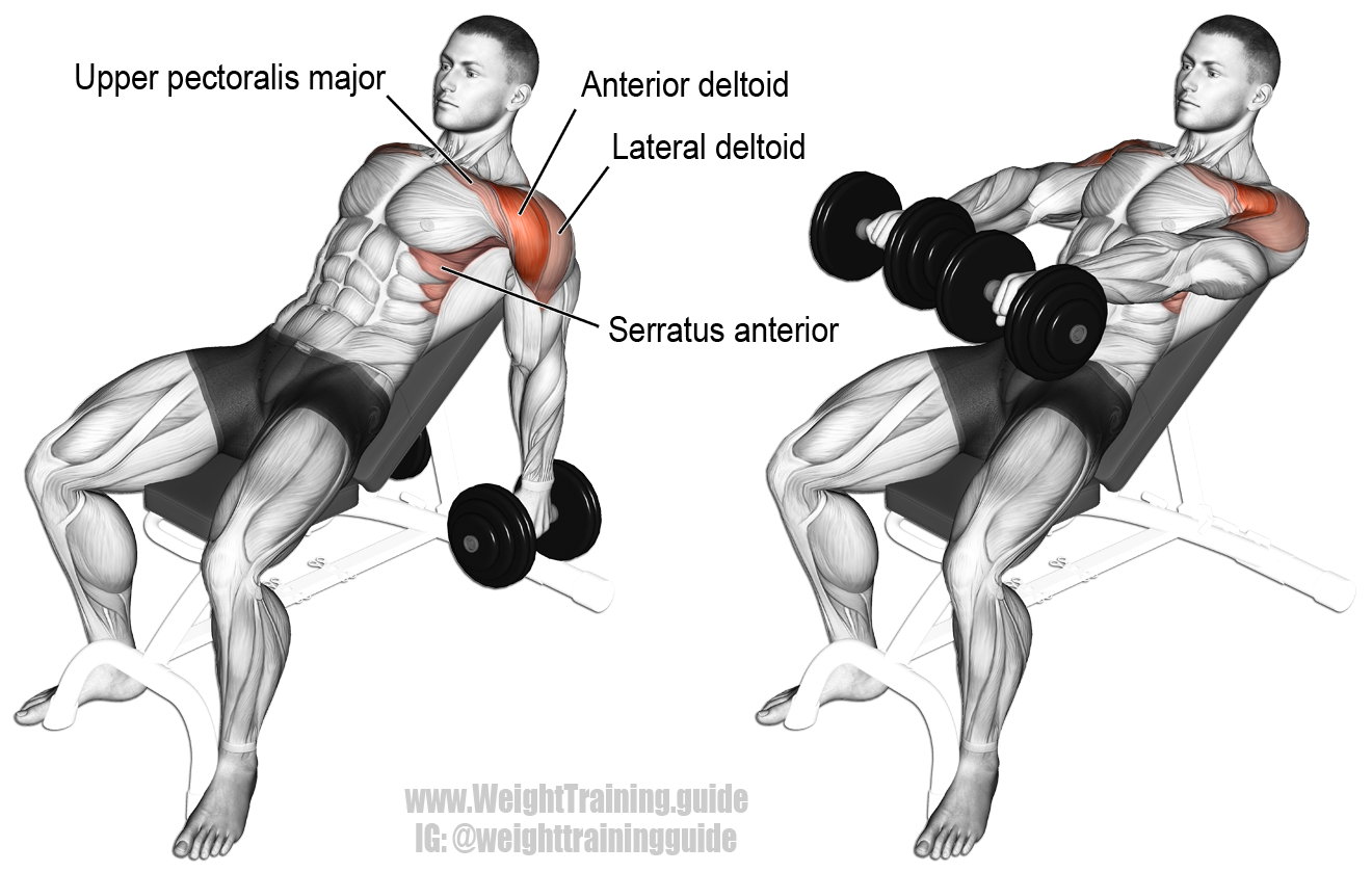 incline dumbbell front raise exercise instructions and video