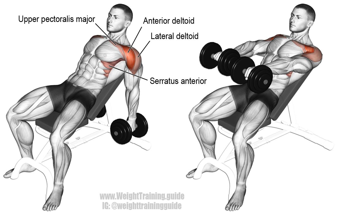 Incline dumbbell front raise | Shoulder Exercises ...
