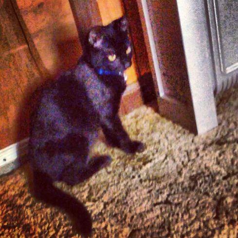 Why is he so cute #black #cat # kitten #kitty #babyboy #blackcat #blackkitty #blackkitten #yelloweyes