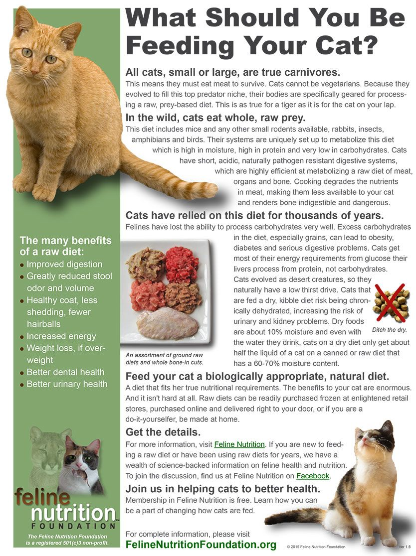 Feline Nutrition S One Page Guides Cat Nutrition Cat Care Cats