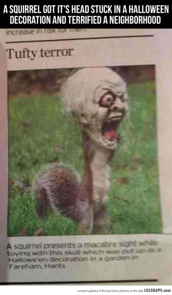 Lolsnaps.com - Scary Squirrel | Hee-hee-hee | Pinterest | Cas, A ...