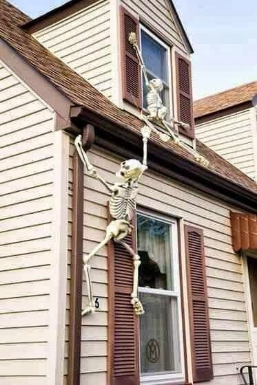 skeleton Halloween decorations this is too funny! halloween - halloween decorations skeletons