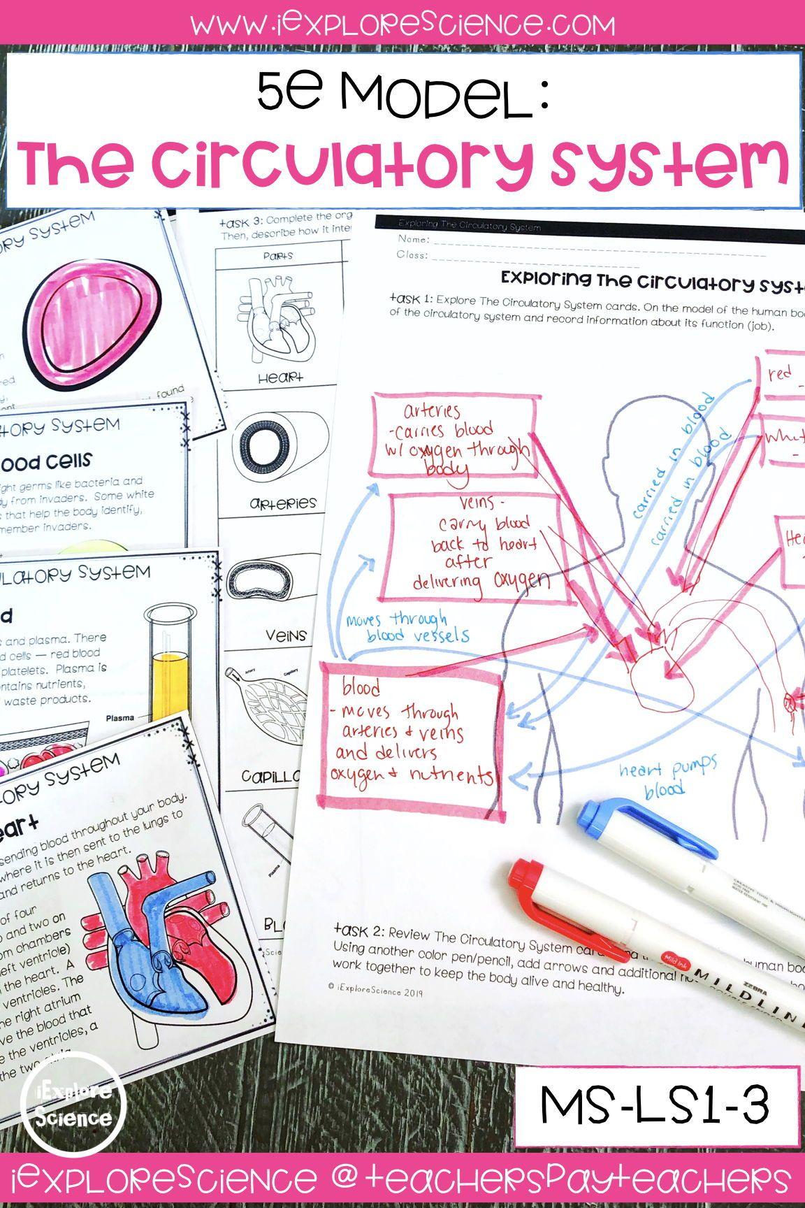 Exploring The Circulatory System Activity Set Ms Ls1 3