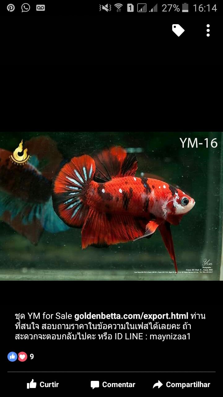Pin by Javier Valenzuela on Stuff to Buy   Pinterest   Betta fish ...