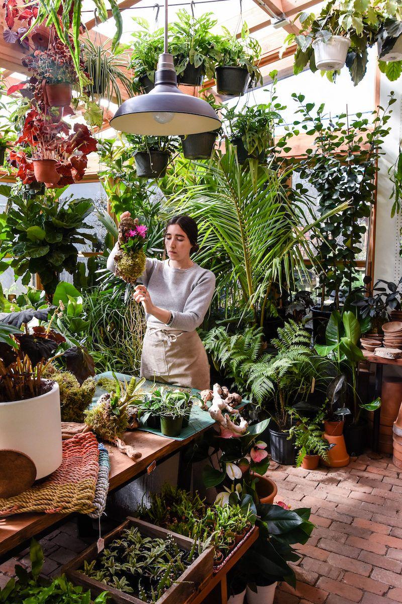 Featured Shop Pistils Nursery Flower Shop Decor Plants House Plants Decor