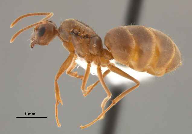 Ant Anatomy Google Search Seen