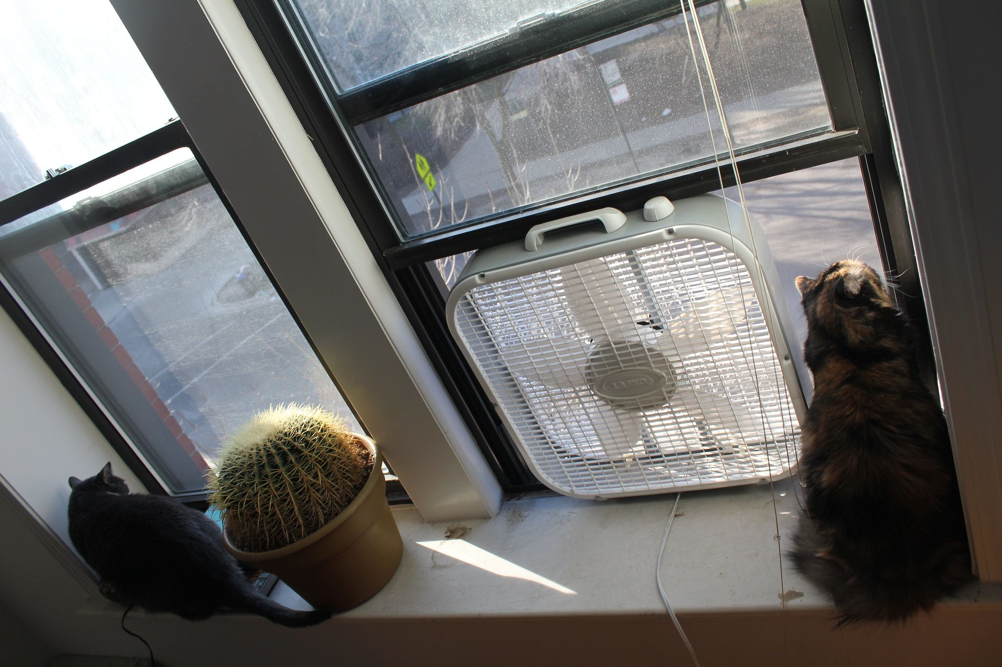 No Air Conditioning? No Sweat Pro Tips On How To Keep